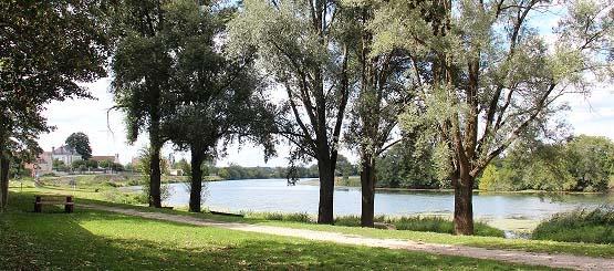La berge de la Saône